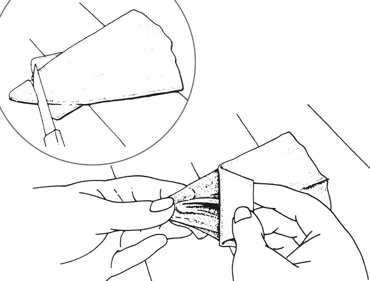 Drawing showing where to cut and how to pull the membrane off of the mantle