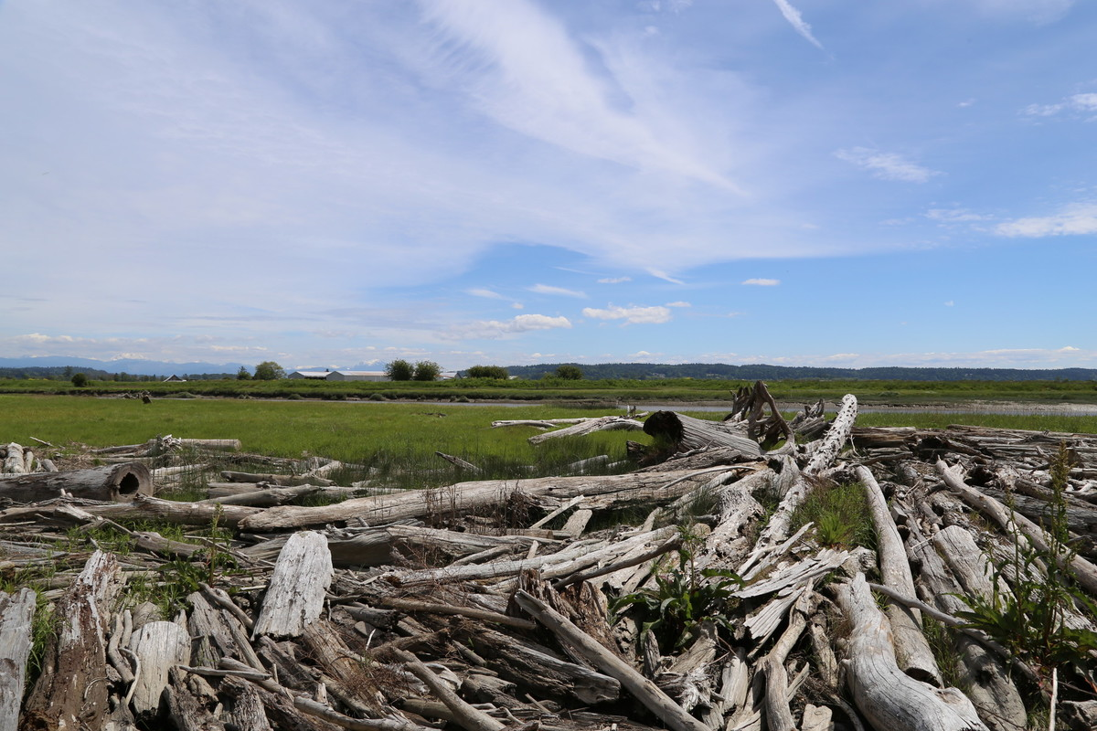 Driftwood on Stillaguamish River