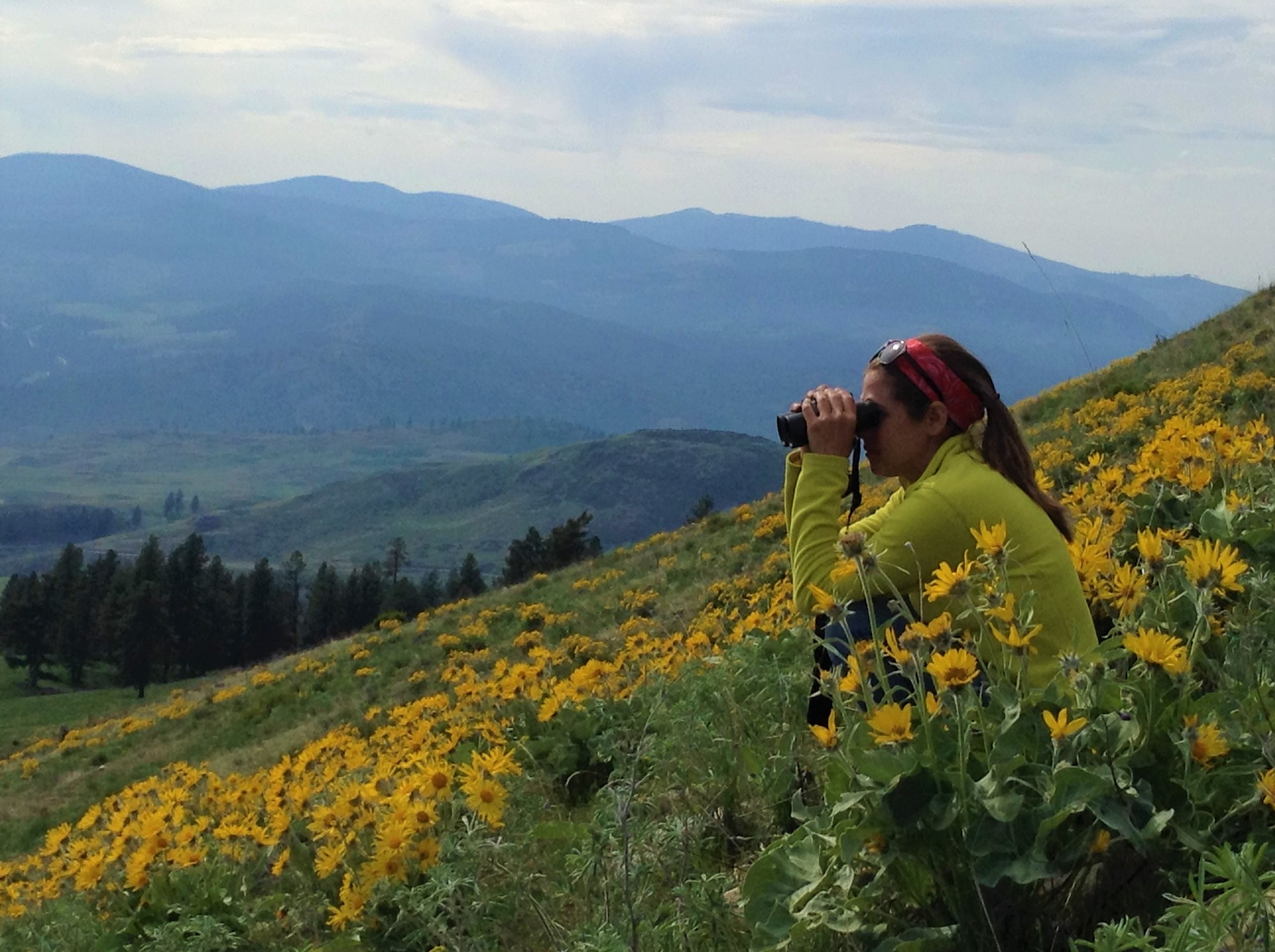 Person looks through binoculars while sitting on hill slope with wildflowers.