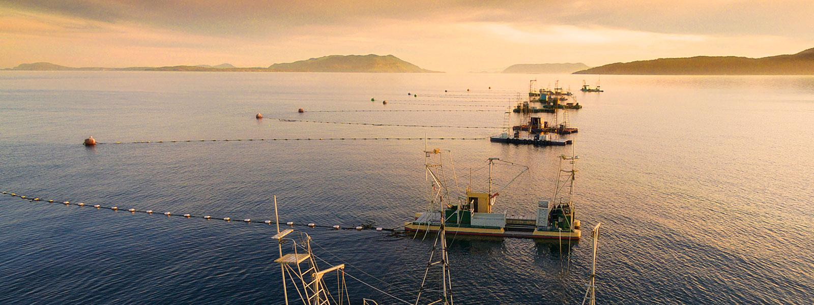 Overview view of San Juan commercial salmon fishing