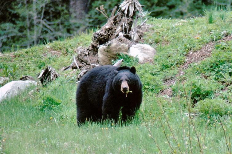 Hunting | Washington Department of Fish & Wildlife