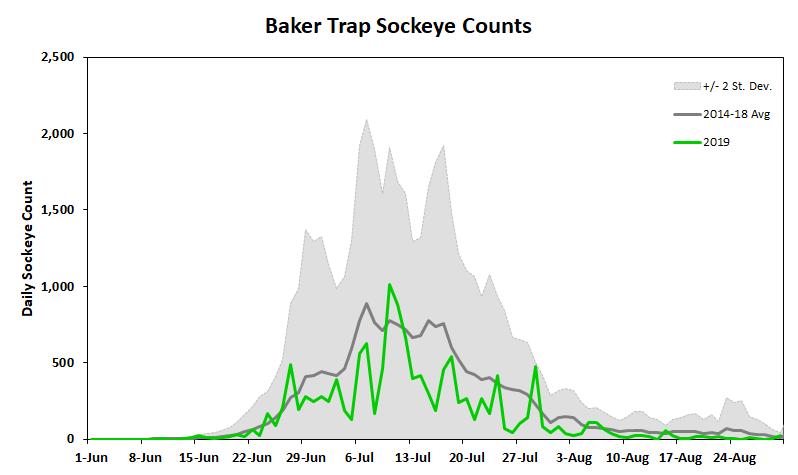 Baker River sockeye salmon season and counts | Washington