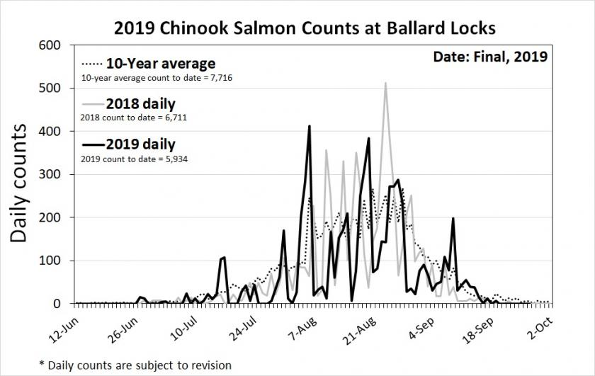 Lake Washington daily Chinook salmon counts