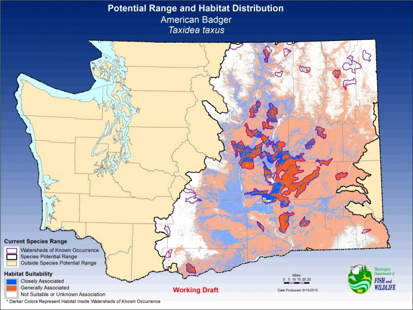 Map of Washington showing boundaries of the American badger potential range based on its habitat distribution occurring in all 20 eastern Washington counties and 2 western Washington counties, Lewis and Skamania.