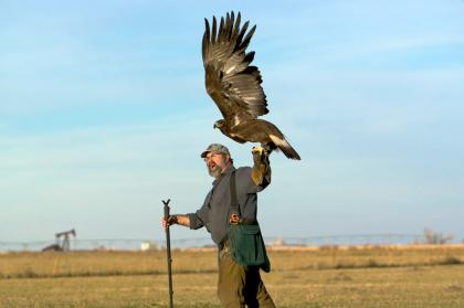 Photo of a falconer casting off an eagle. The eagle's wings are fully extended ready to take off.