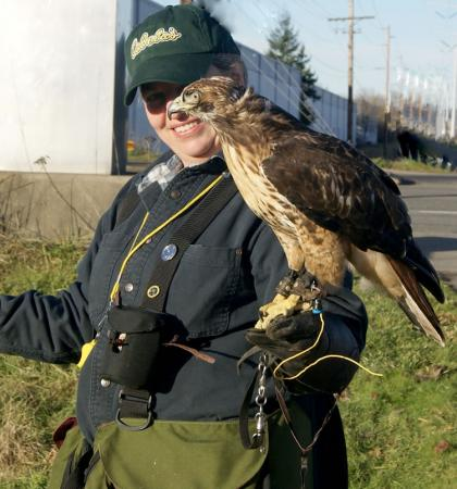 Photo of a falconer with a red-tailed hawk perched on her gloved arm.