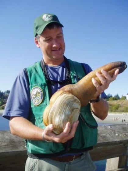 WDFW employee holds large geoduck