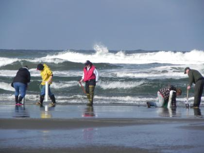 Razor clamming at Twin Harbors beach