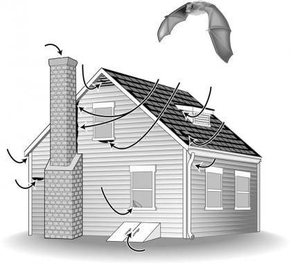 Diagram shows the various entry points into a house for a bat.
