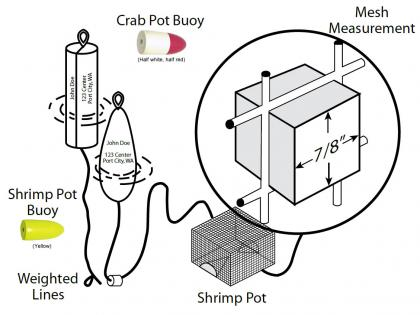 Diagram showing how to connect a buoy to a shrimp or crab pot
