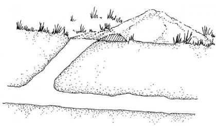 A drawing shoes the position and depth of a pocket gopher tunnel.