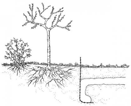 A drawing shows a fence built underground to prevent gopher tunnels under gardens.
