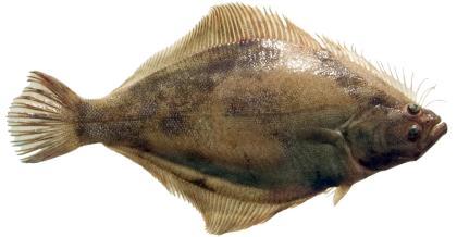 Current California Ocean Recreational Fishing Regulations