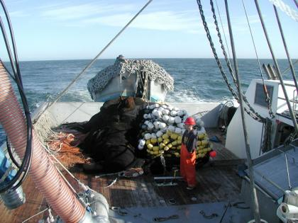 View of a commercial sardine boat at sea with a fisherman in a hard hat standing on the deck next to a large pile of netting