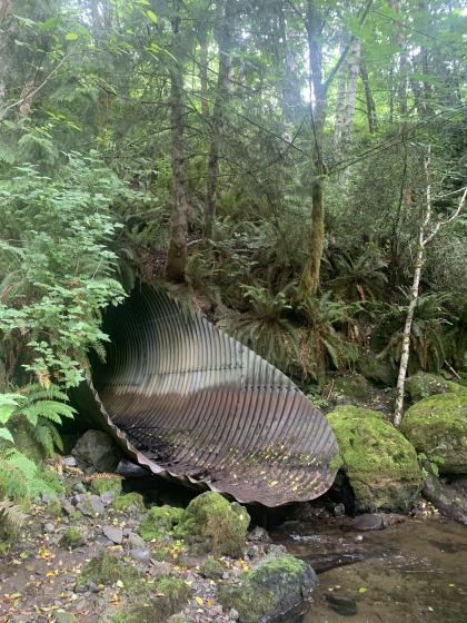 Large culvert near stream
