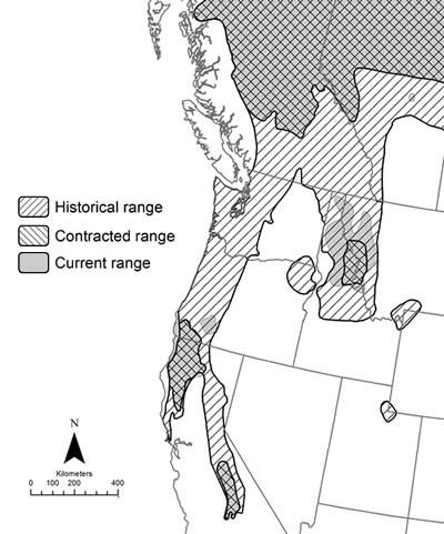 Map with shaded range of the Fisher between the west and Canada