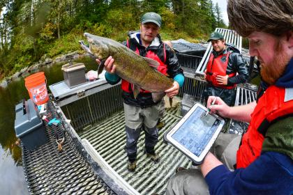 WDFW staff holds up Chinook salmon while another person records data on a tablet