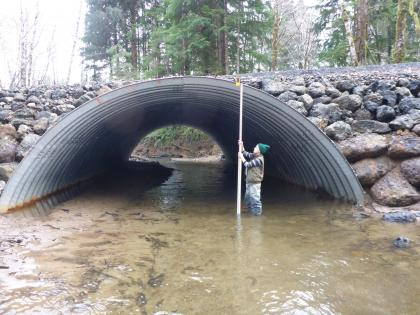 WDFW employee takes measurements inside large culvert