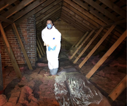 Biologist in protective gear in attic preparing to collect bat guano for testing