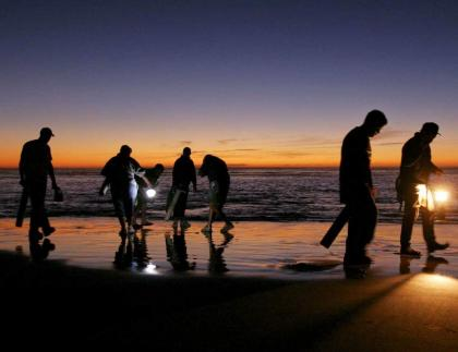 Several people digging for razor clams on beach at sunset.
